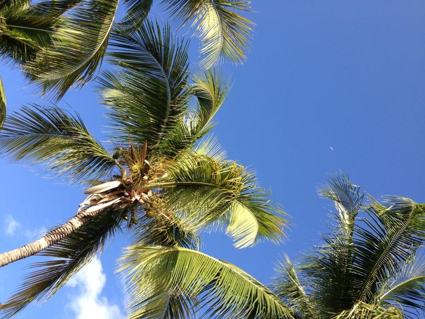 Cooper Island palms.
